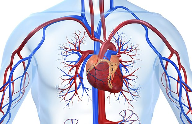 Despre inima si factori de risc